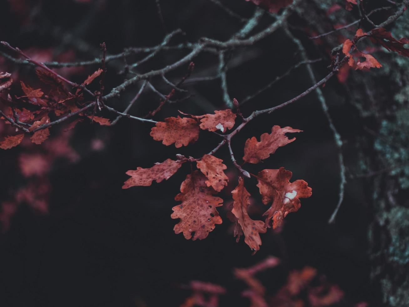 Close-up of brown leaves photo
