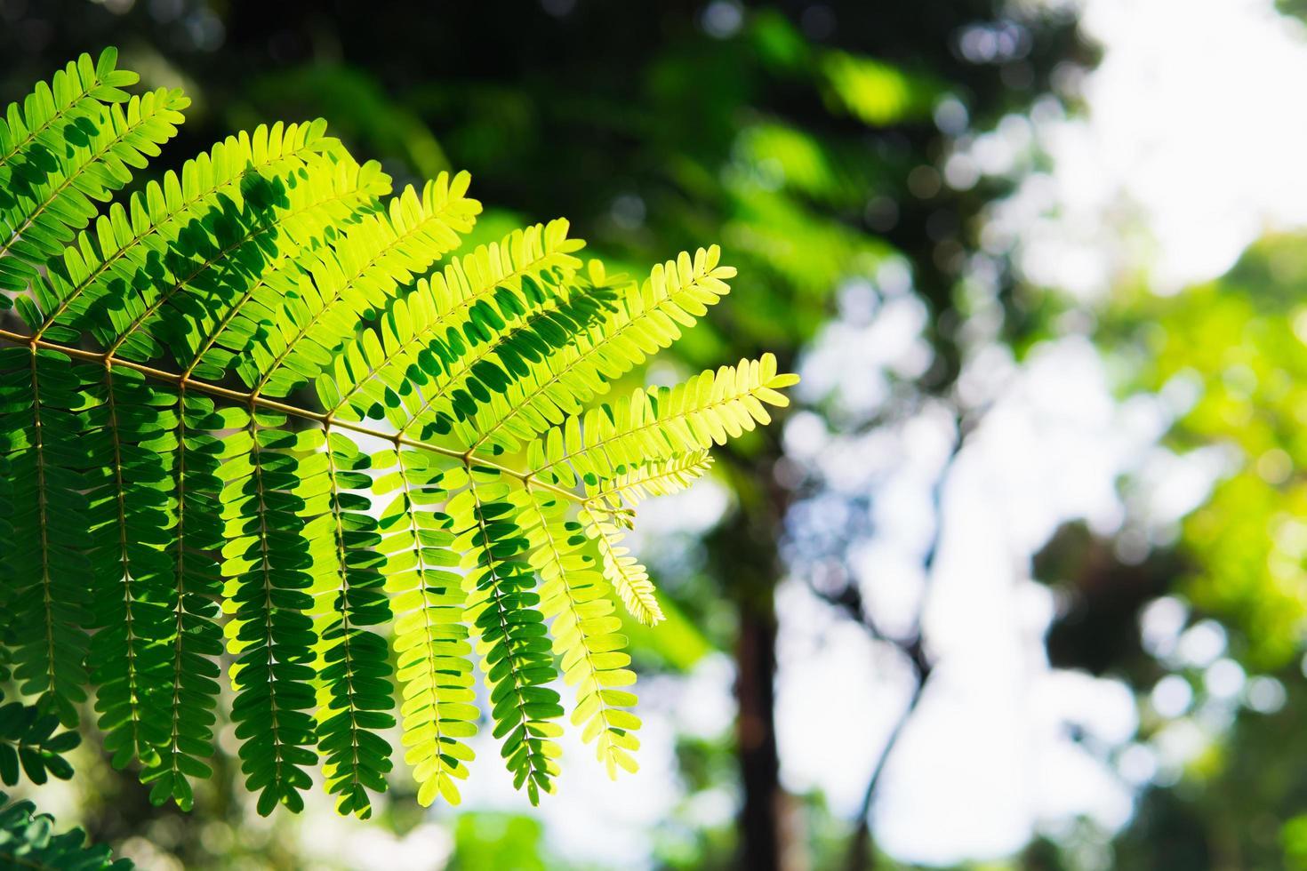 Close-up of fern leaf photo