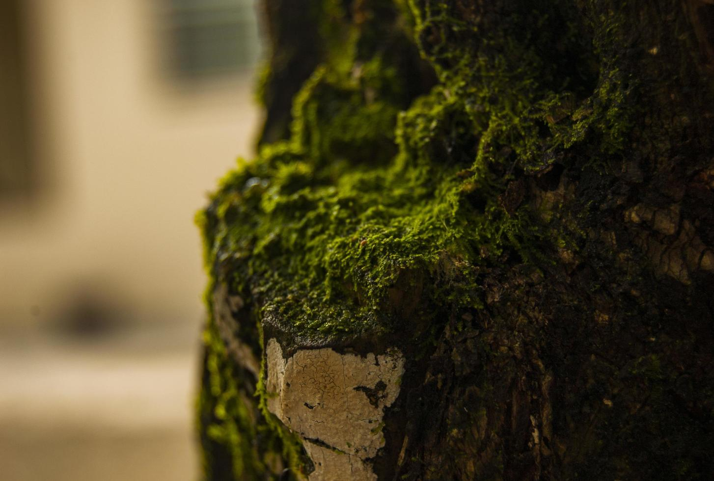 Green moss on tree photo