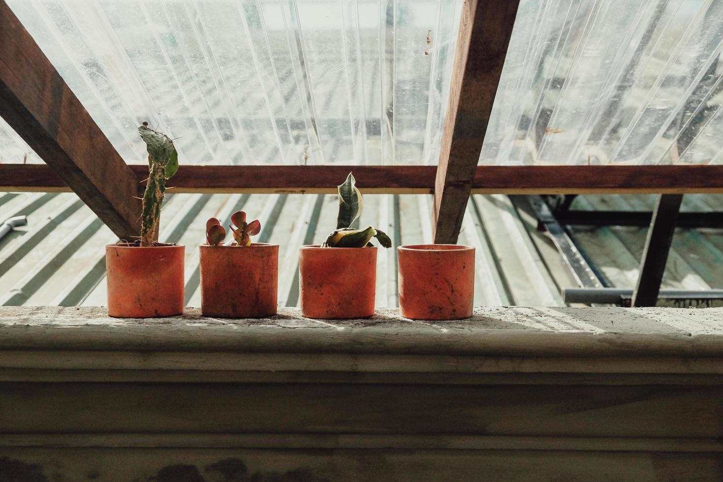 Green plants in clay pots photo