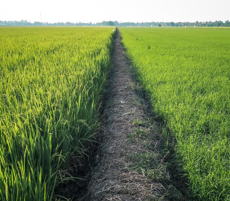 Walking path in grass field photo