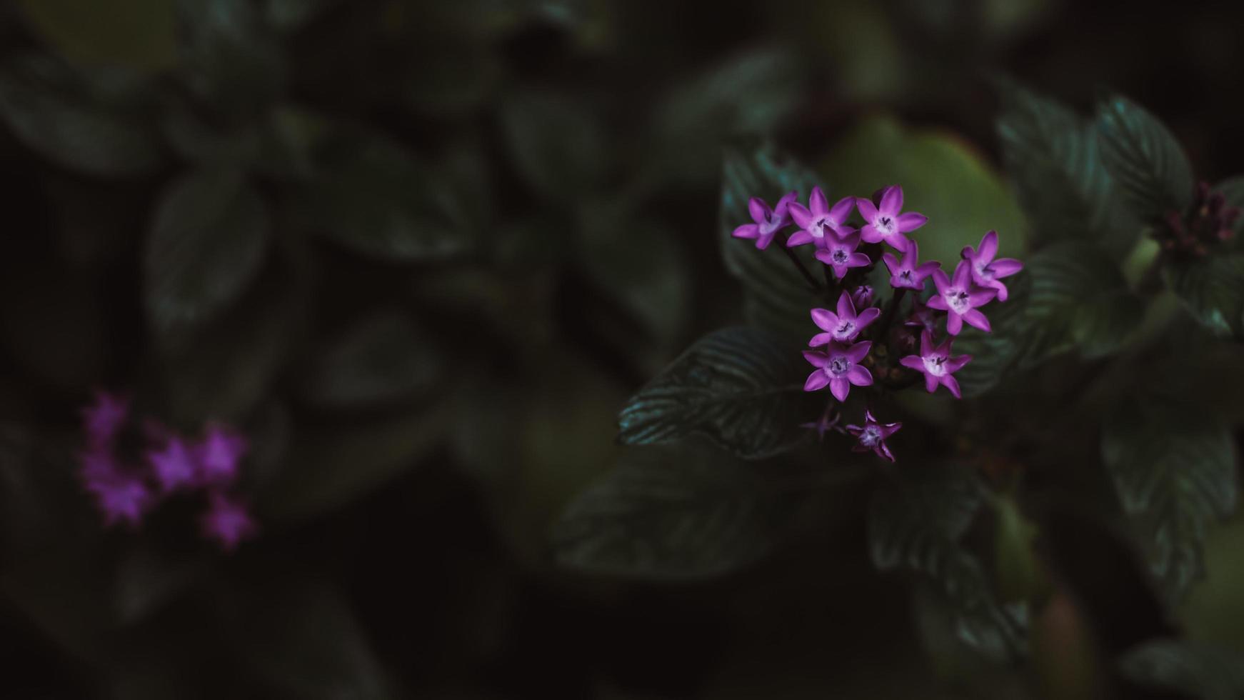 pequeñas flores de color púrpura en bosque tropical foto