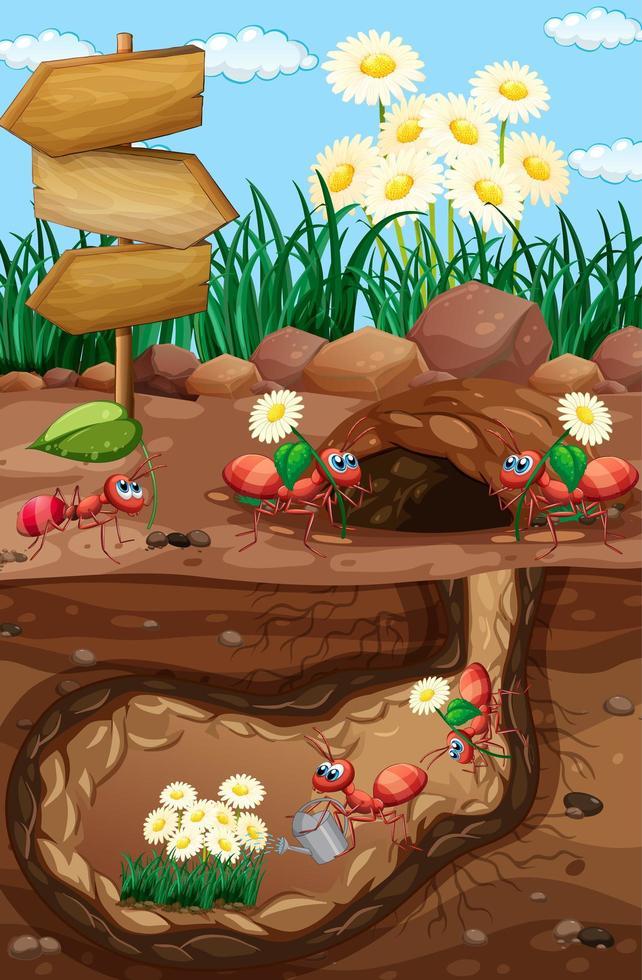 escena con hormigas y flores en el jardín vector
