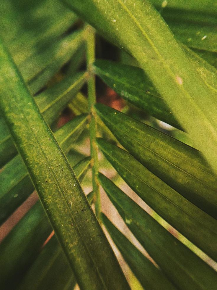 primer plano de la planta de hoja verde foto