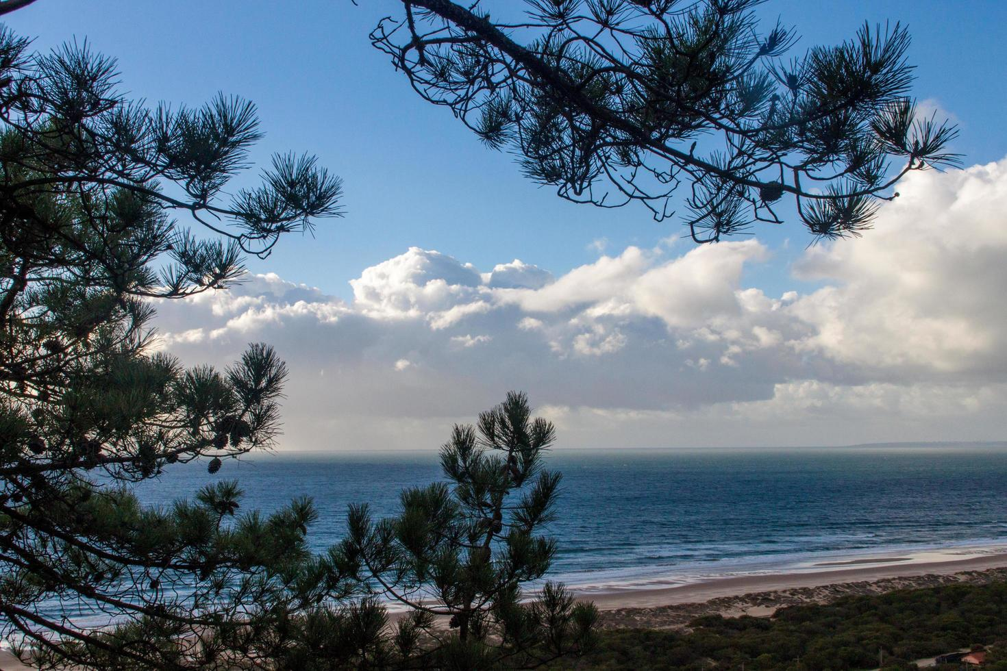 Pine tree branches and beach with cloudy blue sky photo
