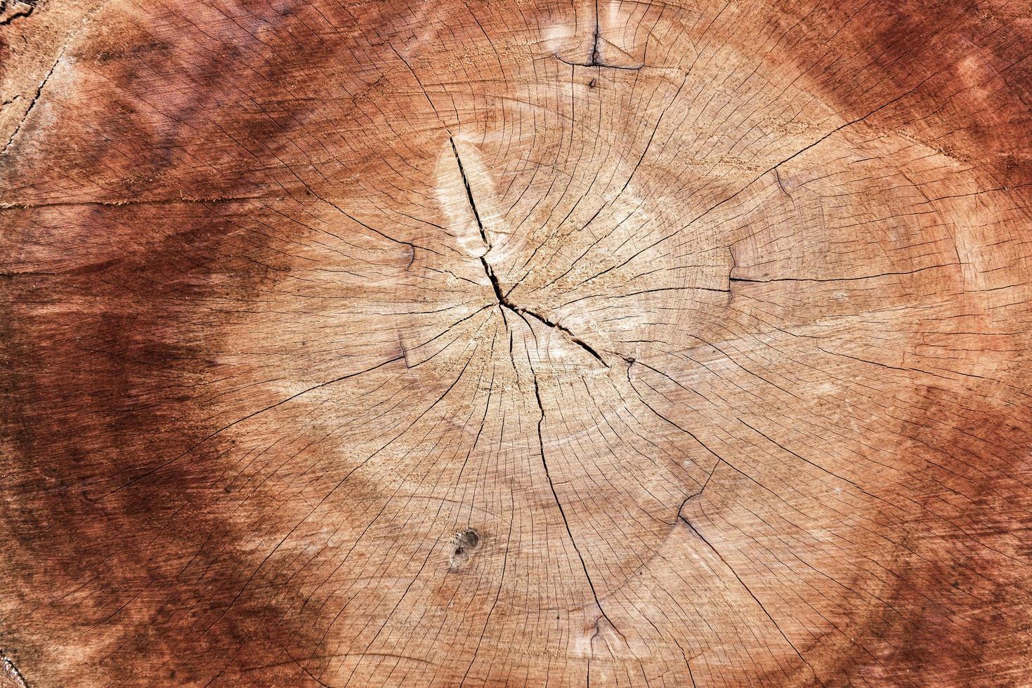 superficie del anillo anual de madera foto