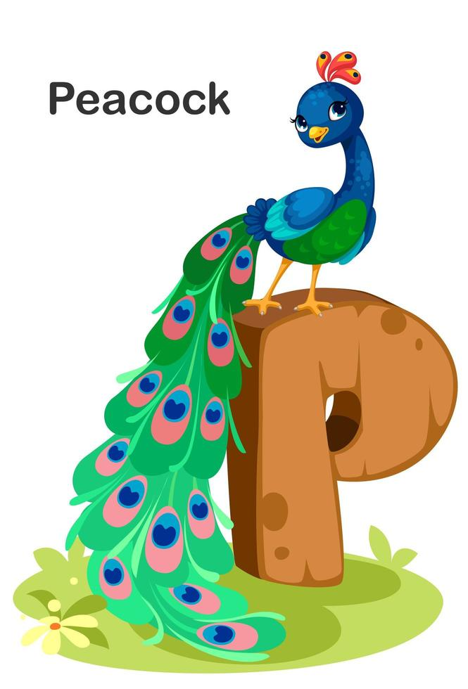 P for Peacock 2 vector