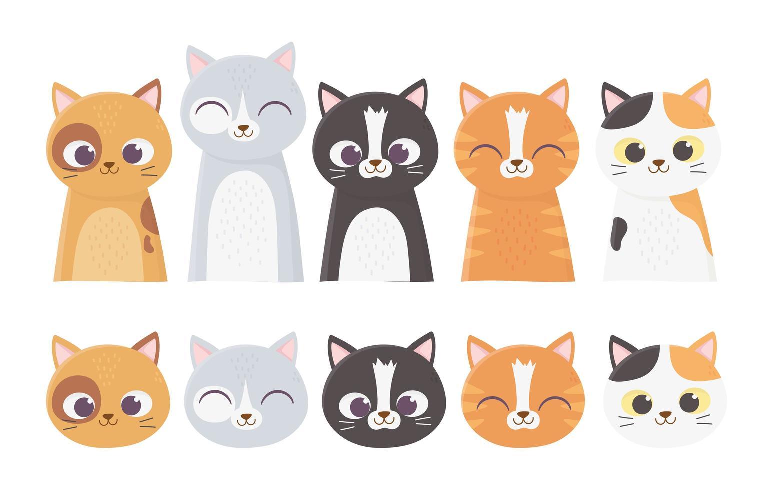 caras de gatos surtidos vector
