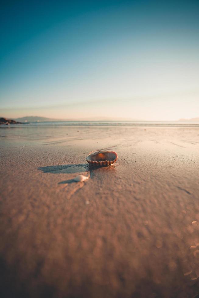 Primer plano de concha en la playa. foto