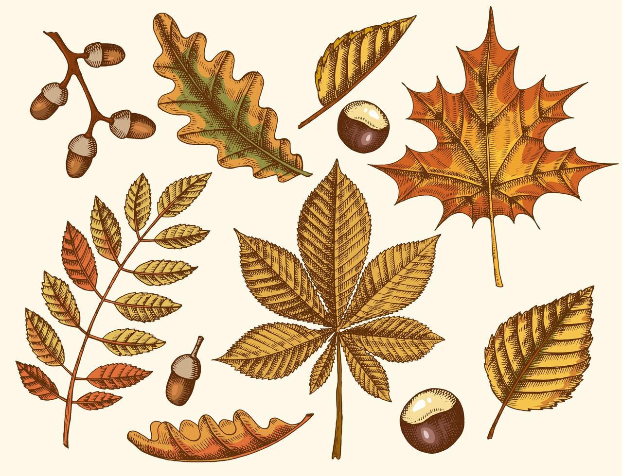 ensemble de feuilles d'automne sur fond clair vecteur