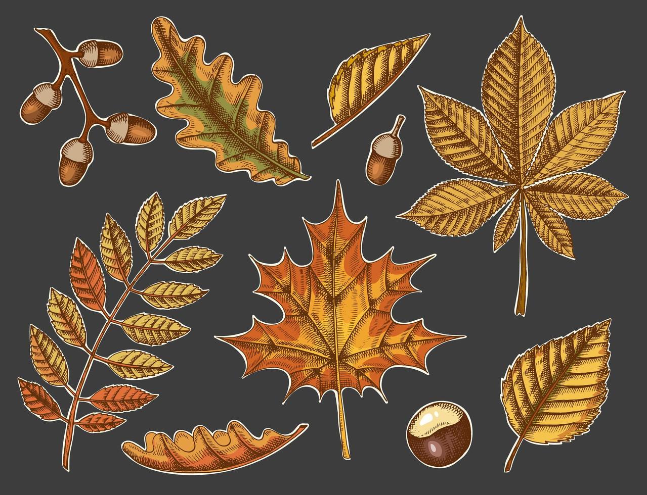 ensemble de feuilles d'automne sur un fond sombre vecteur