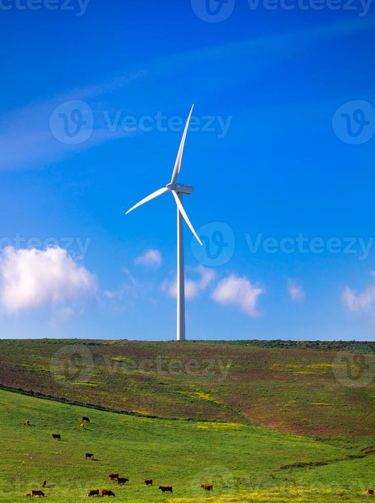 Windmill on green meadow. Spain ecologist photo