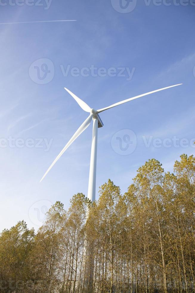 wind turbine above trees in holland photo