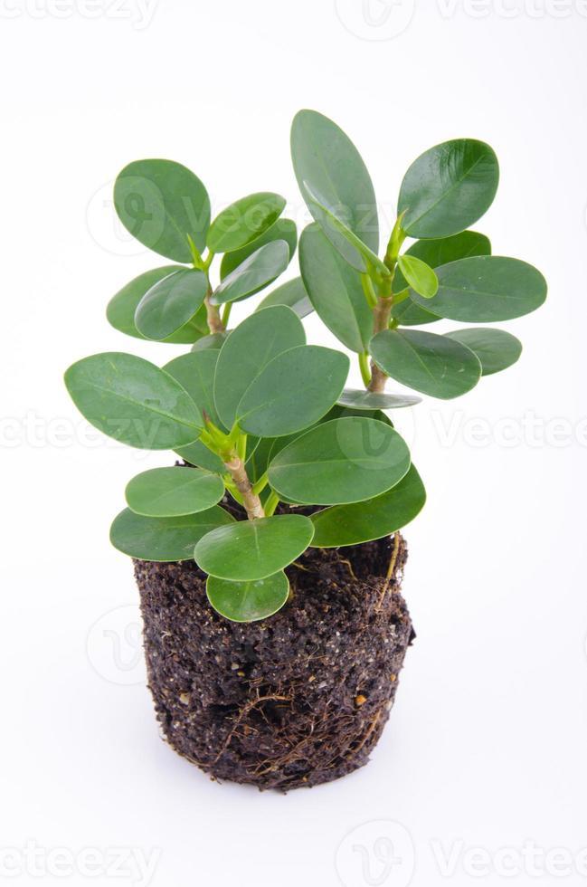 planta de semillero foto
