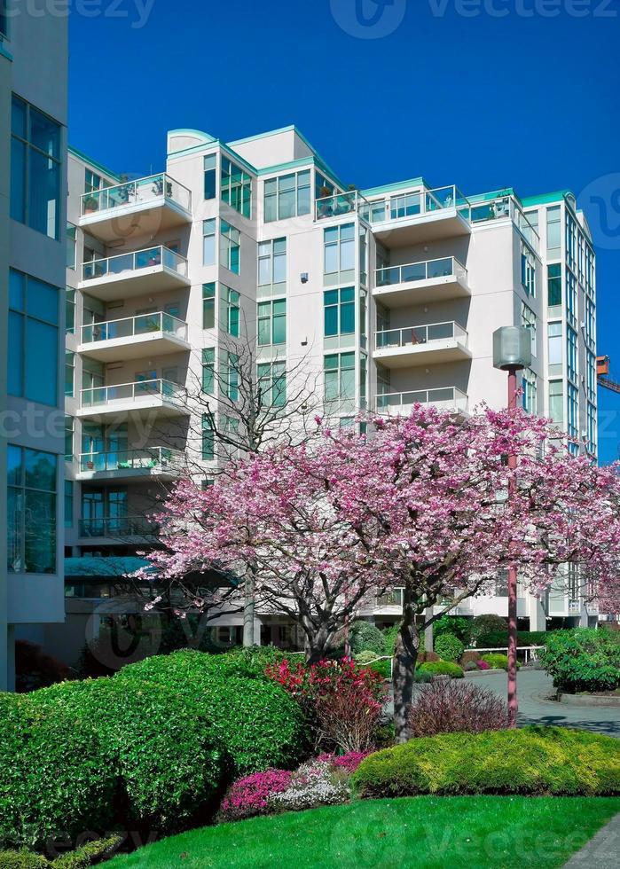 Casa adosada moderna con flor de cerezo al frente. foto