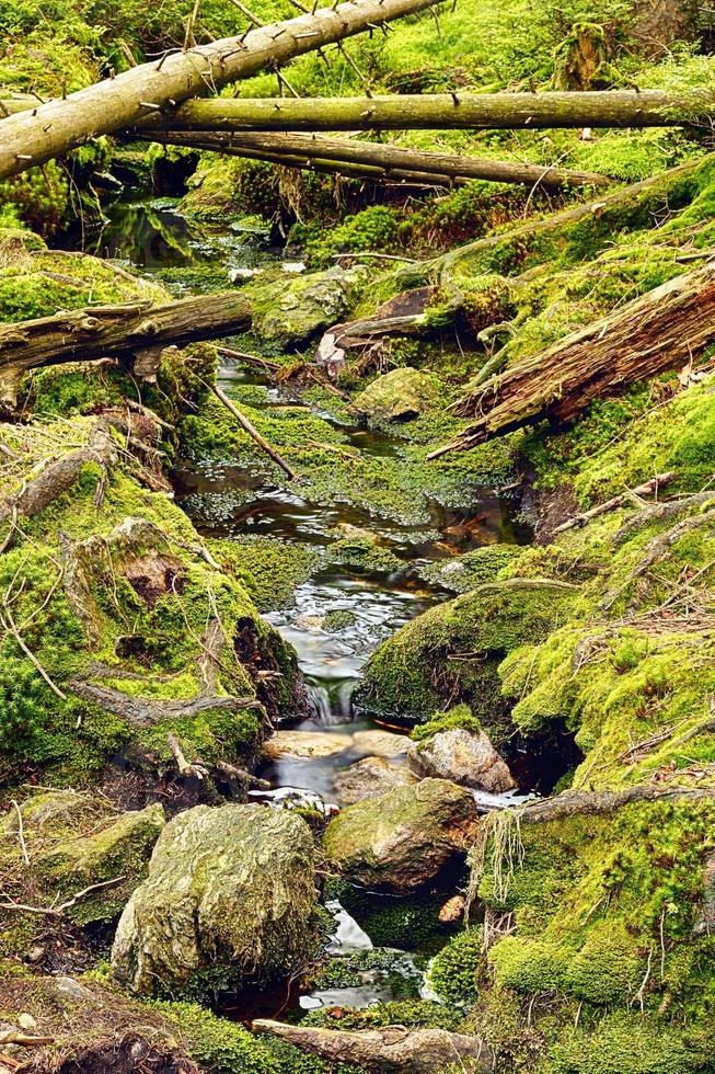 Primeval forest with the creek photo