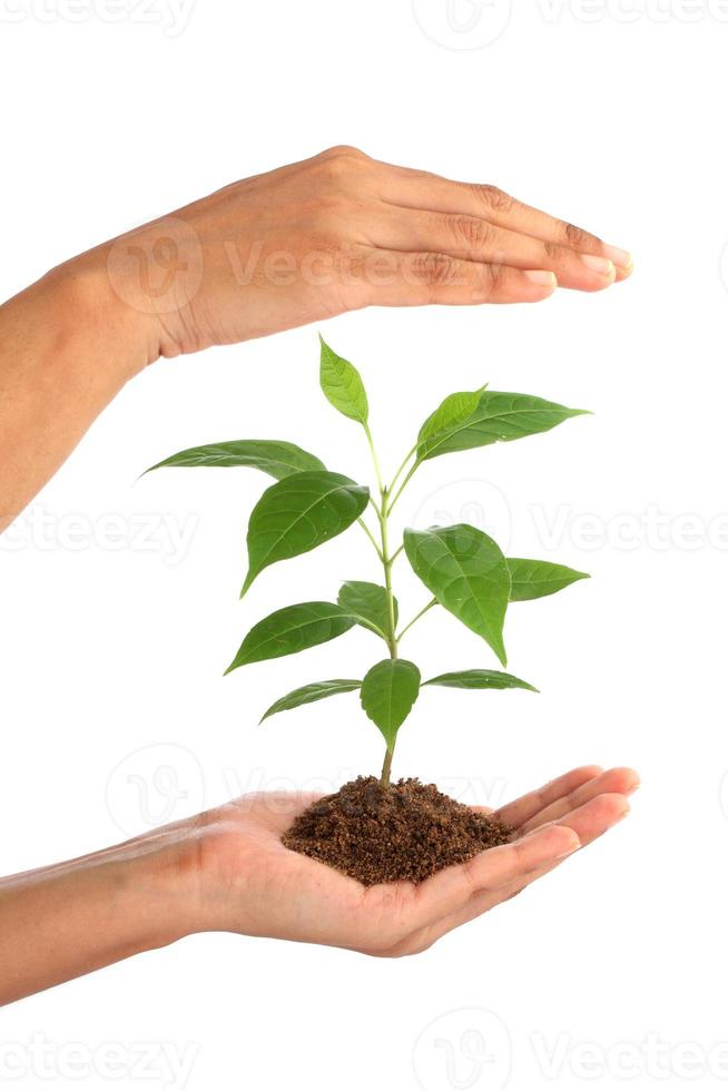 Hand holding green baby plant on white photo