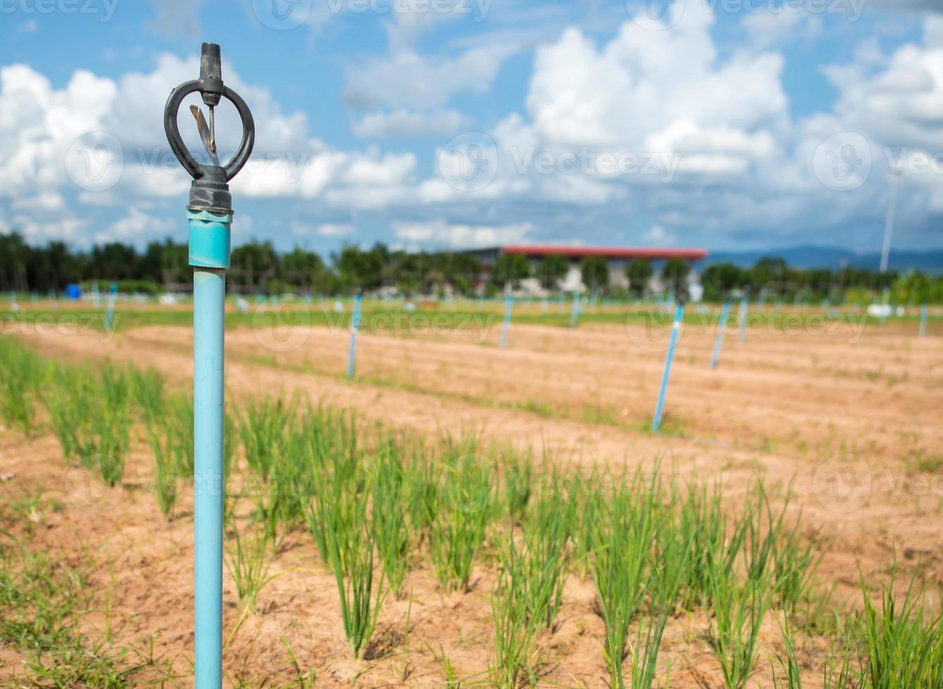 Sprinkler irrigation for agriculture field in developing country photo