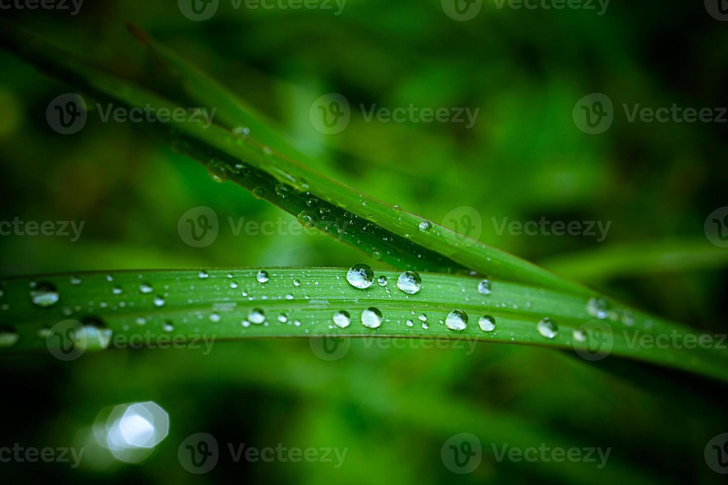 Gotas de agua sobre la hierba verde. macro foto