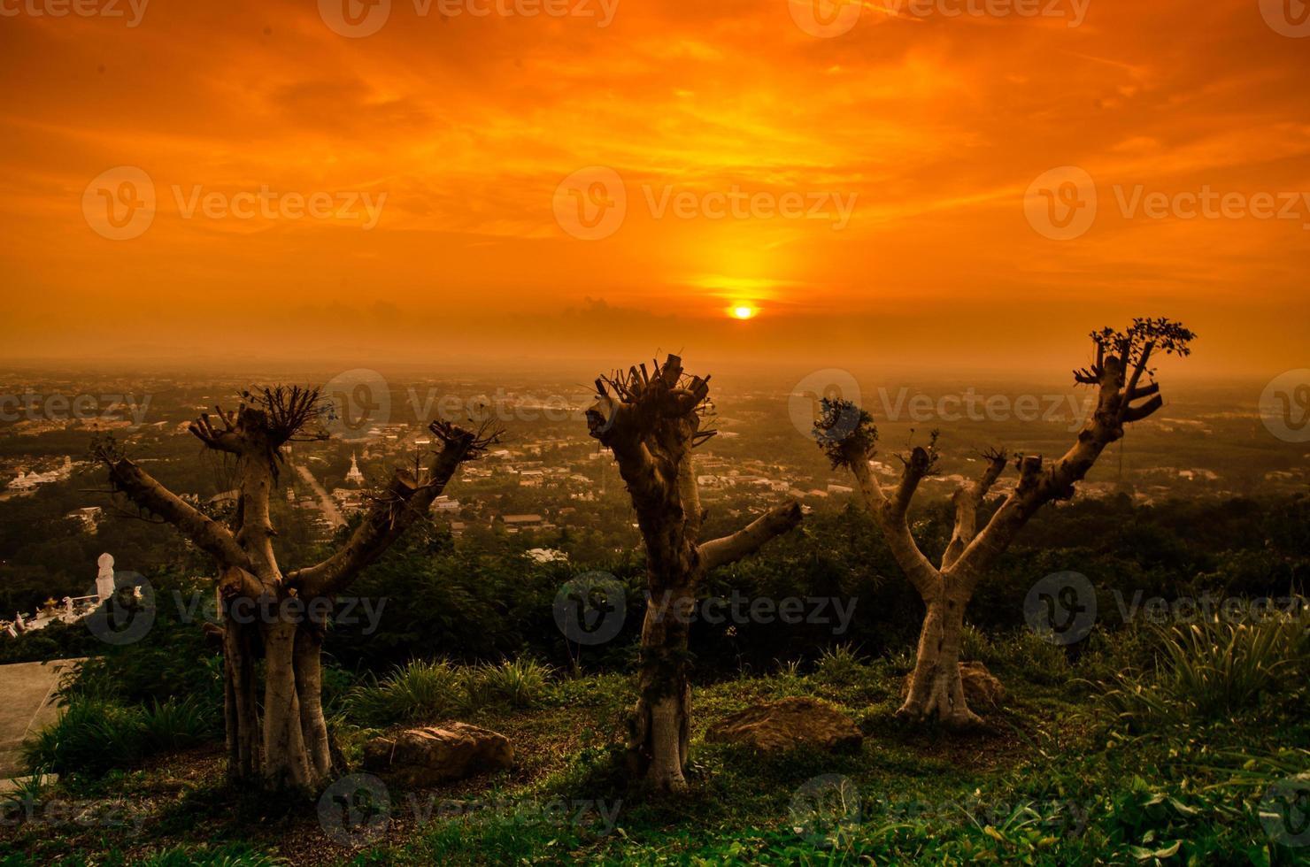 árboles en la noche foto