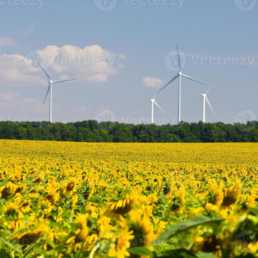 Wind turbines generating electricity photo