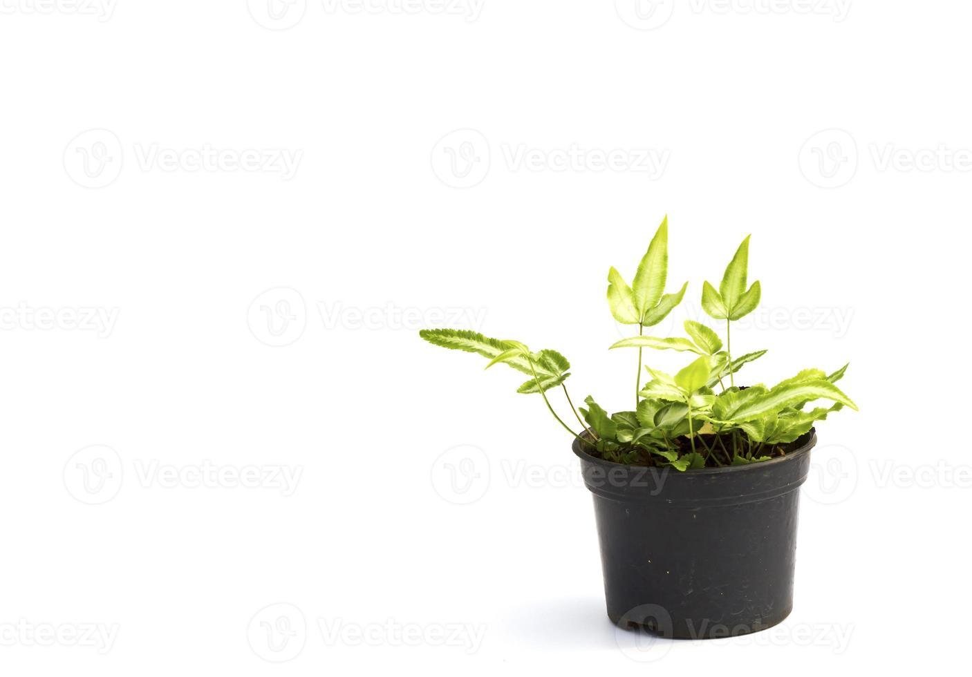 pequeña planta en una maceta negra foto