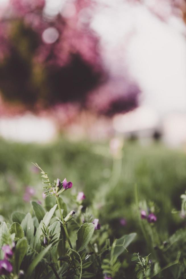 Fotografía de enfoque selectivo de flor de pétalos de color púrpura foto
