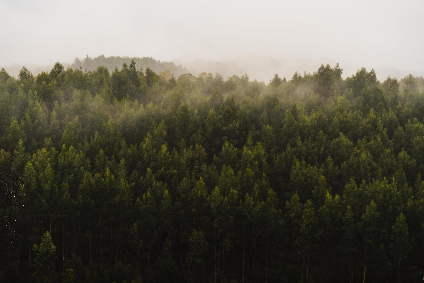 Green forest during foggy day photo