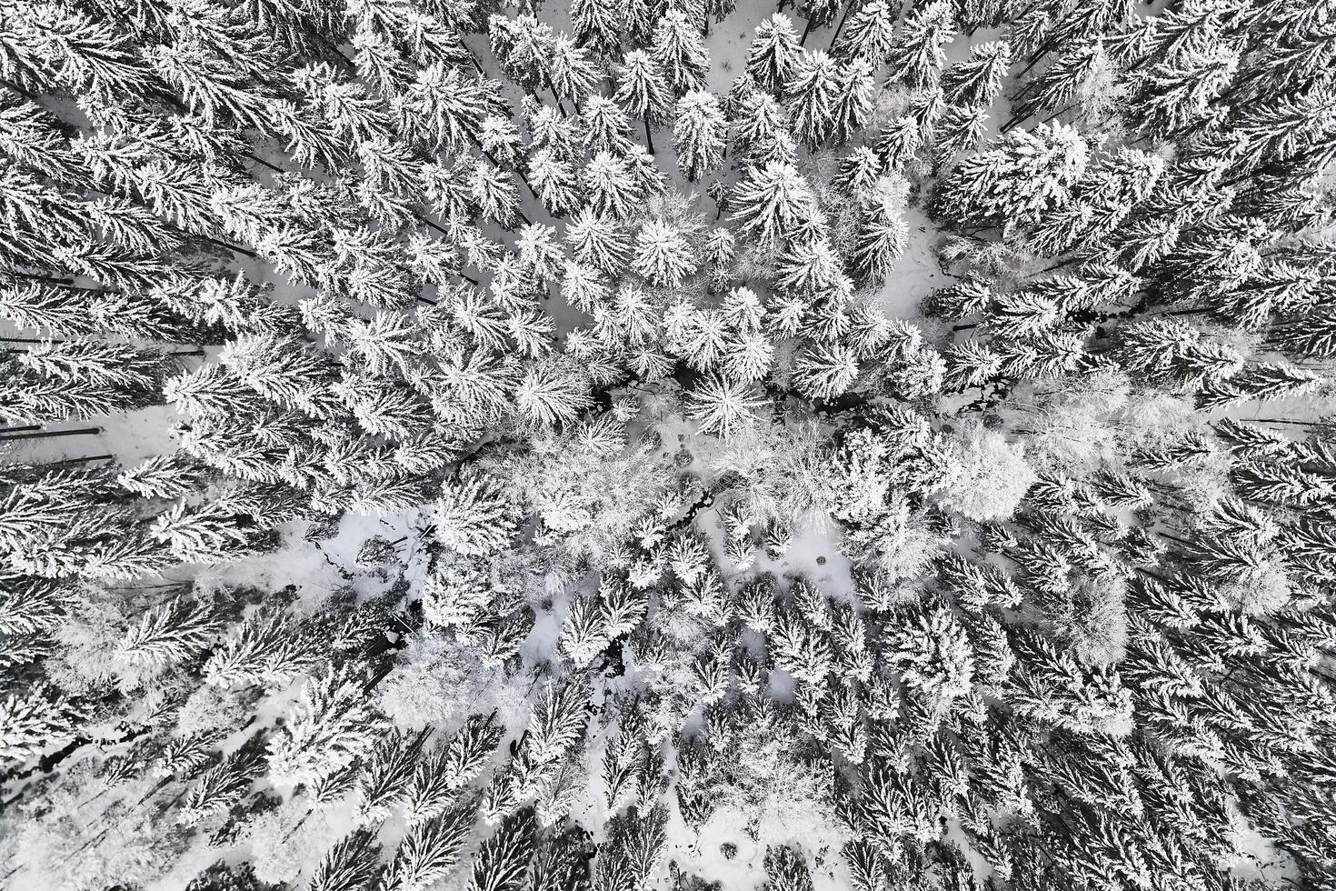 Top-down view of trees covered in snow photo