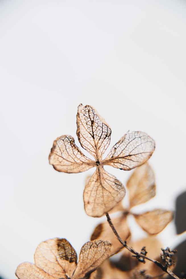 Brown four leafed plant photo