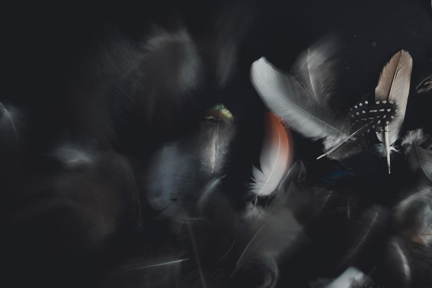 White and black feathers photo