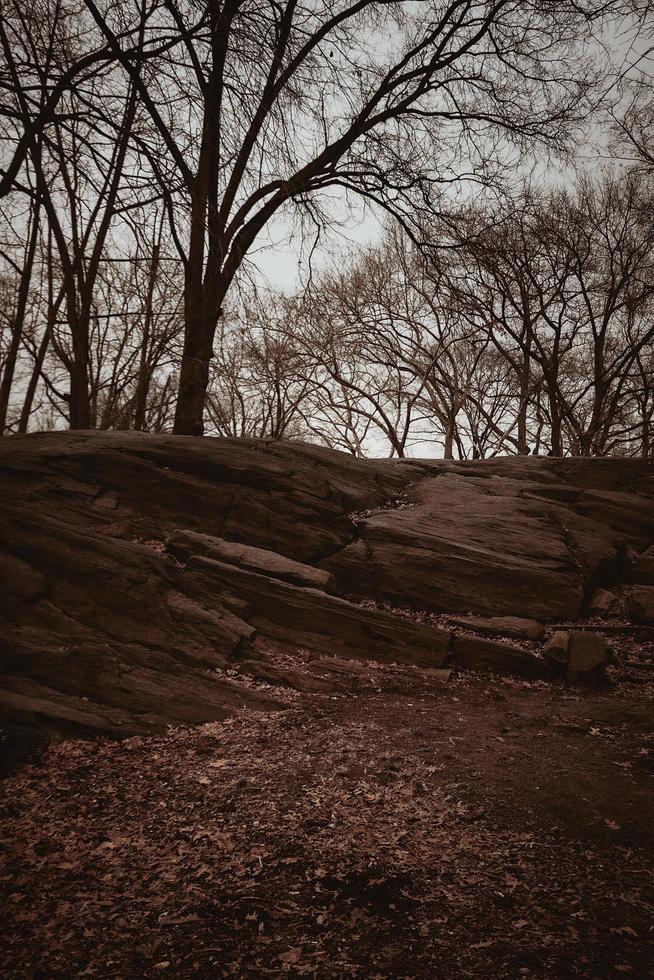 hojas caídas cerca de rocas y árboles desnudos foto
