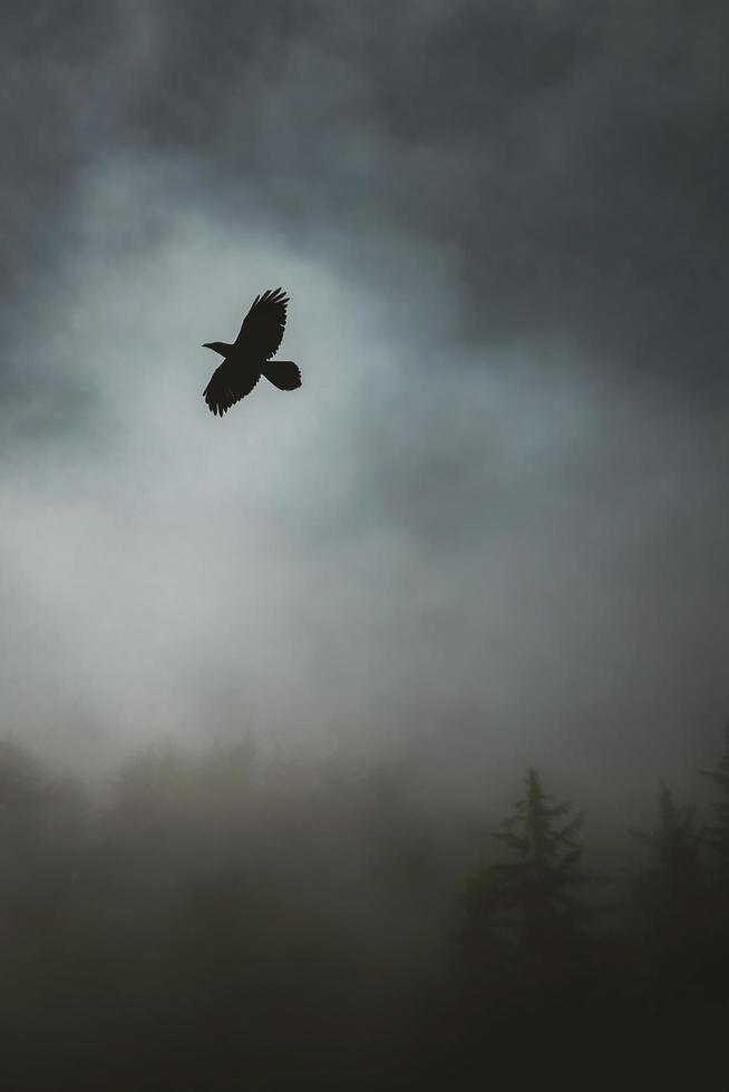 Bird flying in stormy sky photo