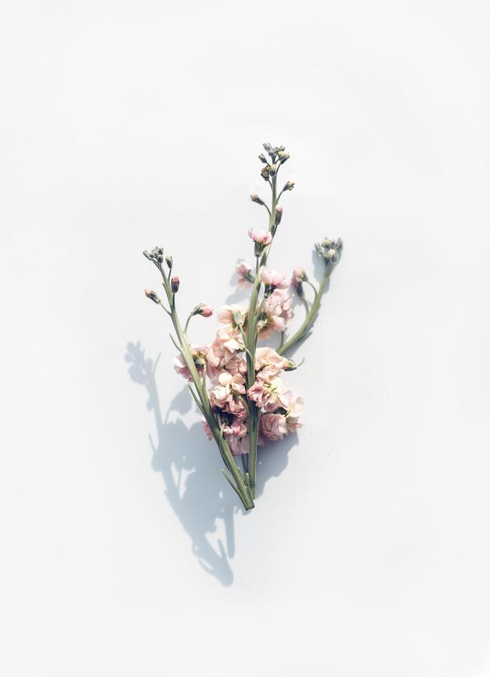 Pink flower on white surface photo