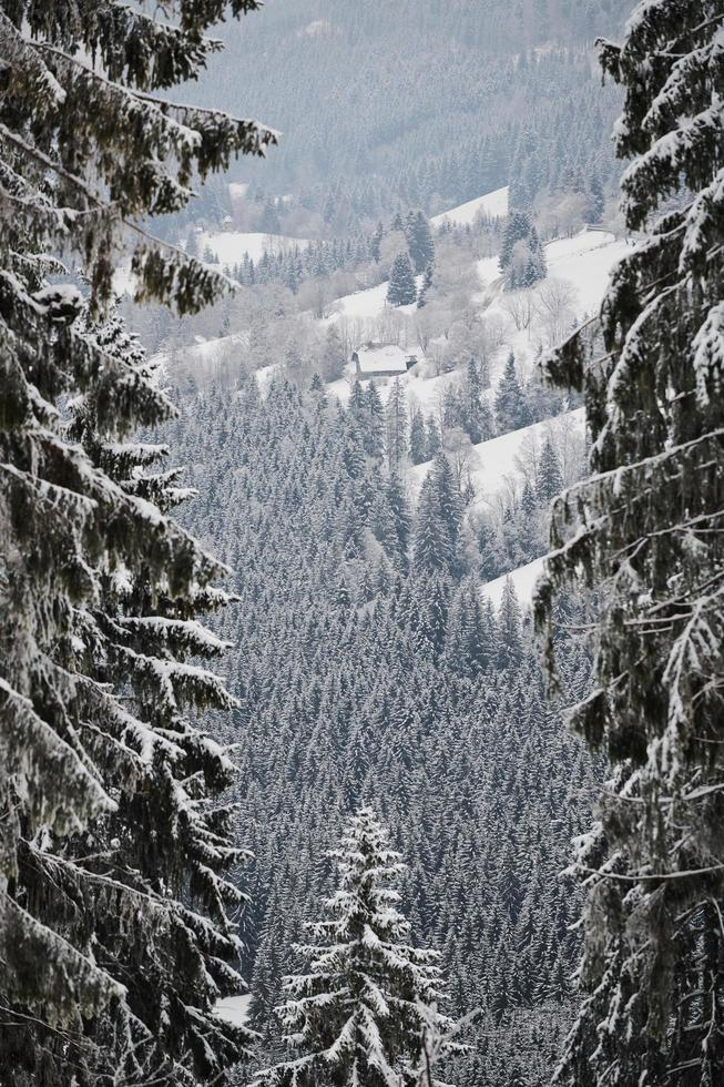 Snow-covered trees in the winter photo