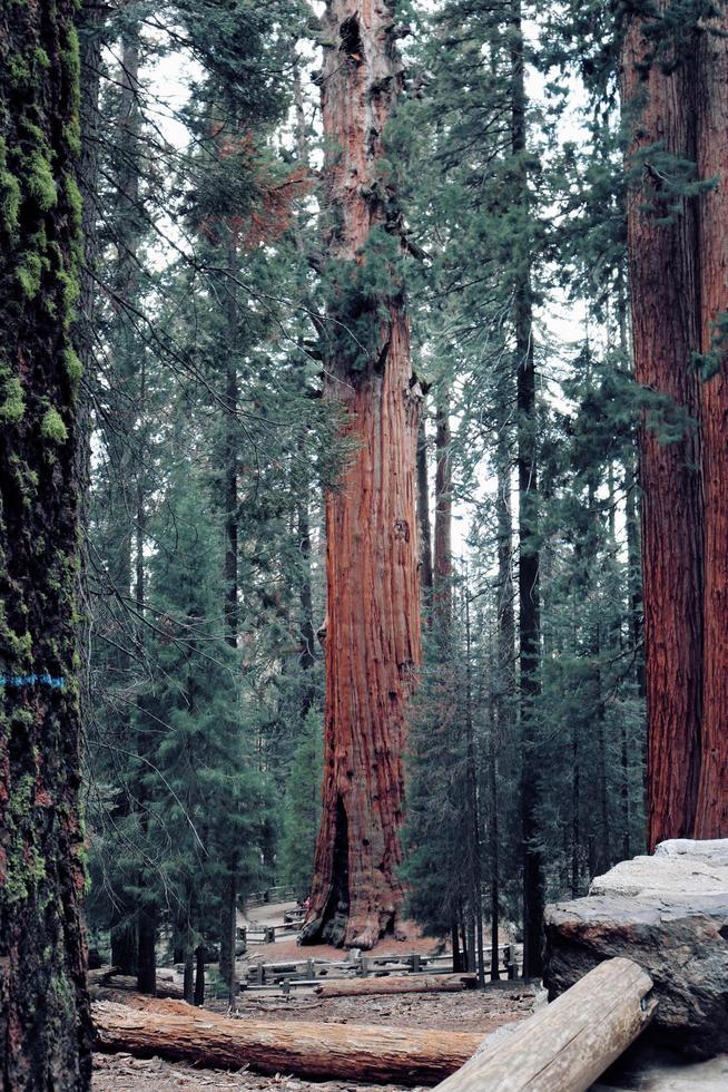 árboles verdes y marrones foto