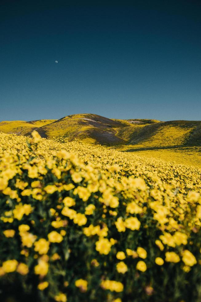 campo de flores bajo el cielo azul foto