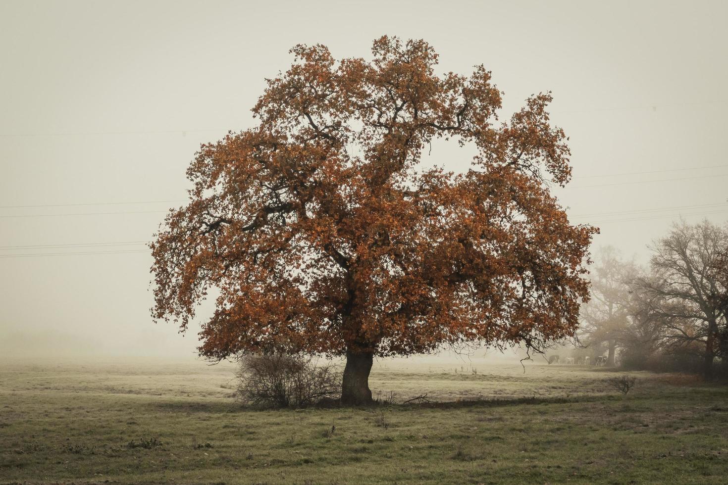 Lone tree in field photo