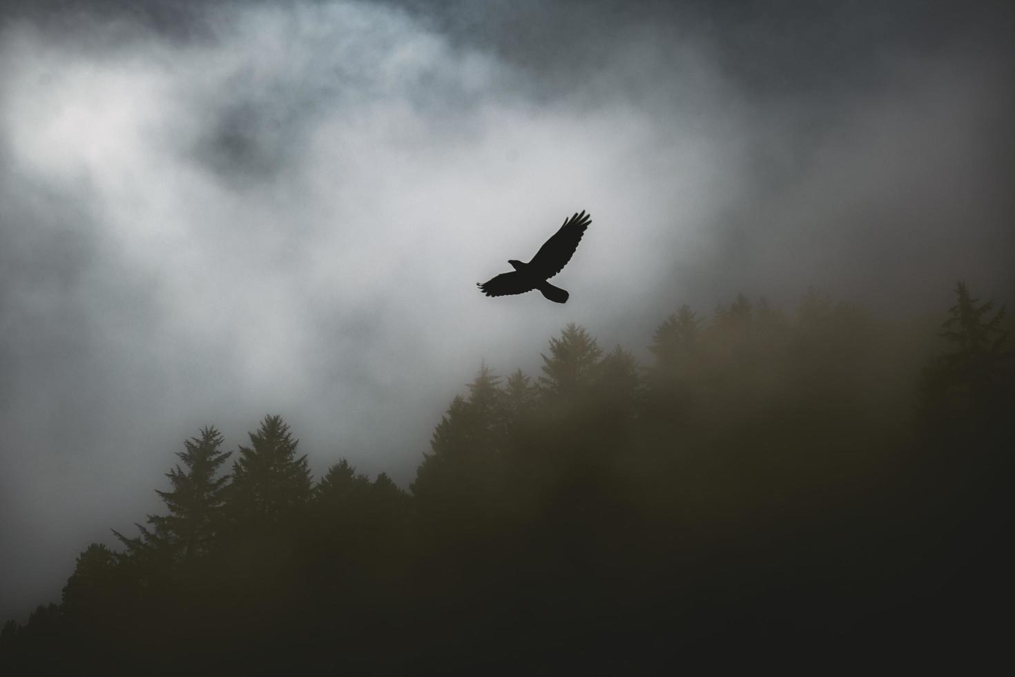pájaro volando sobre paisaje brumoso foto