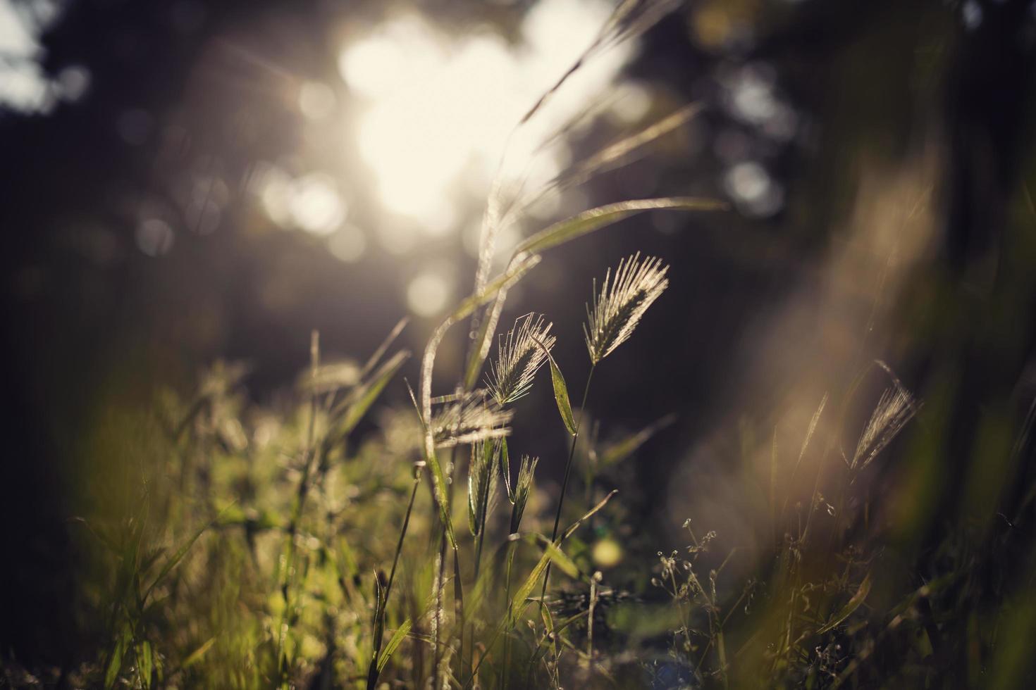 hierba salvaje en la luz del sol foto
