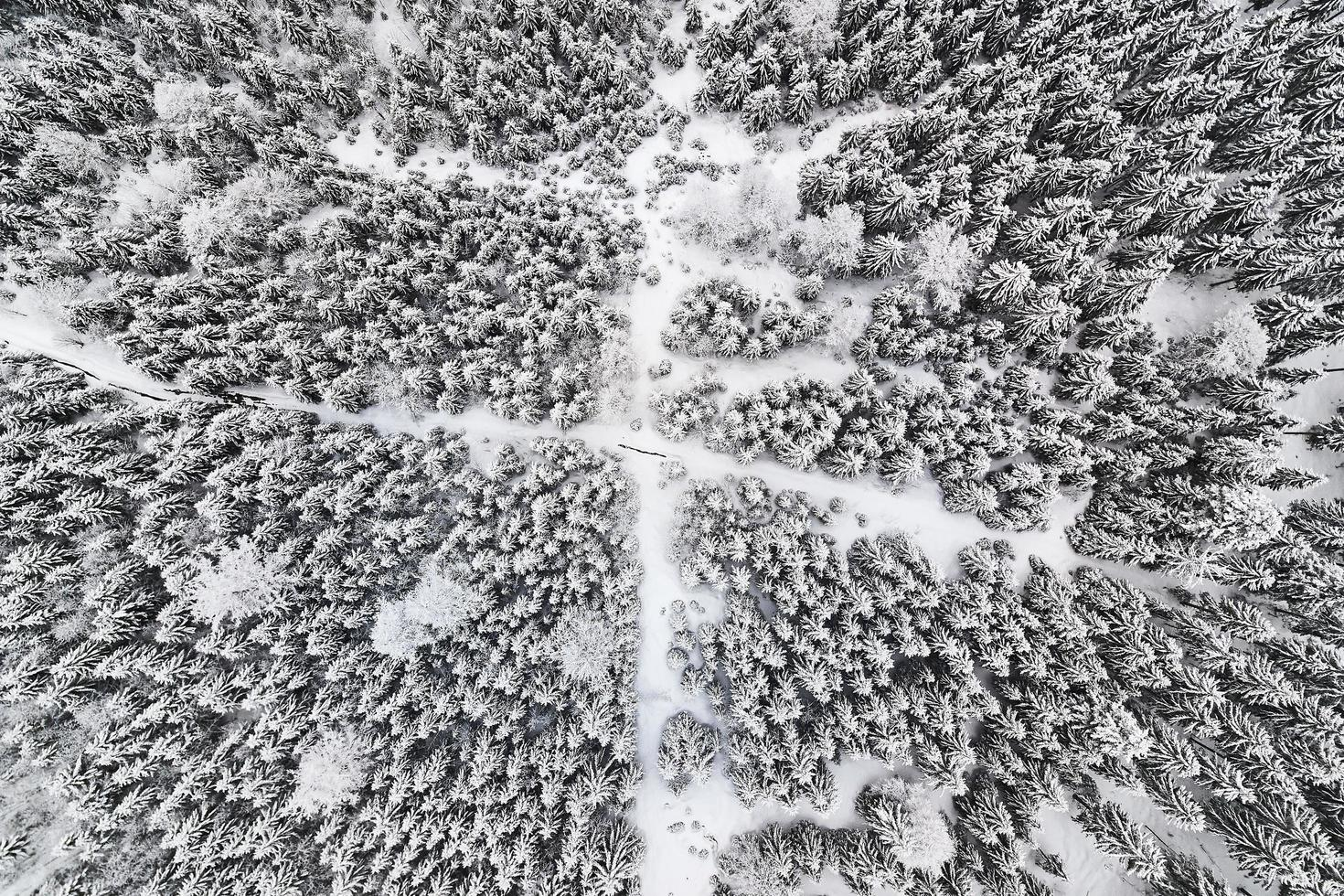 Top-down view of trees covered in snow with hiking trails photo
