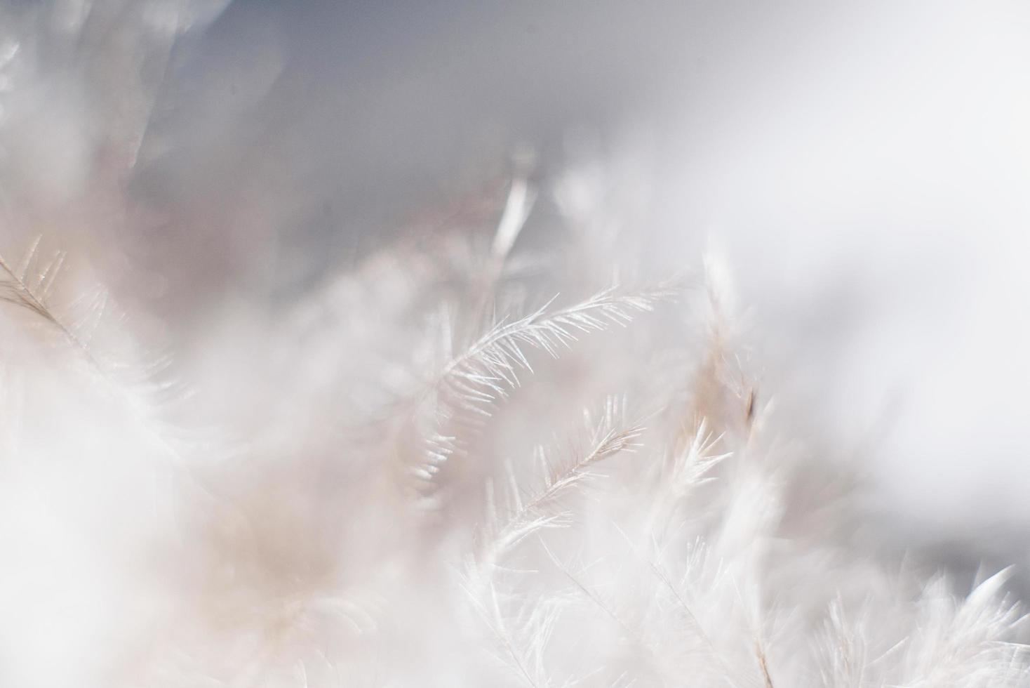 Close up photo of white feathers