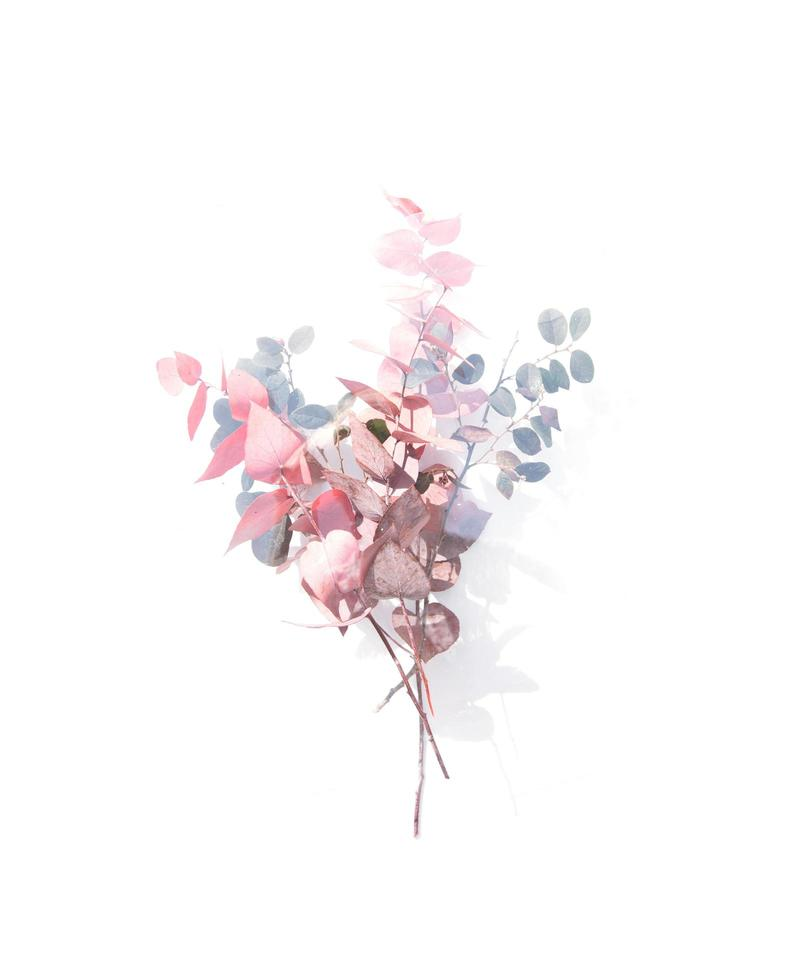 Pink and blue silver dollar eucalyptus leaves  photo