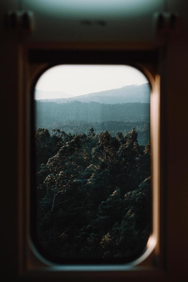 vista del bosque f foto