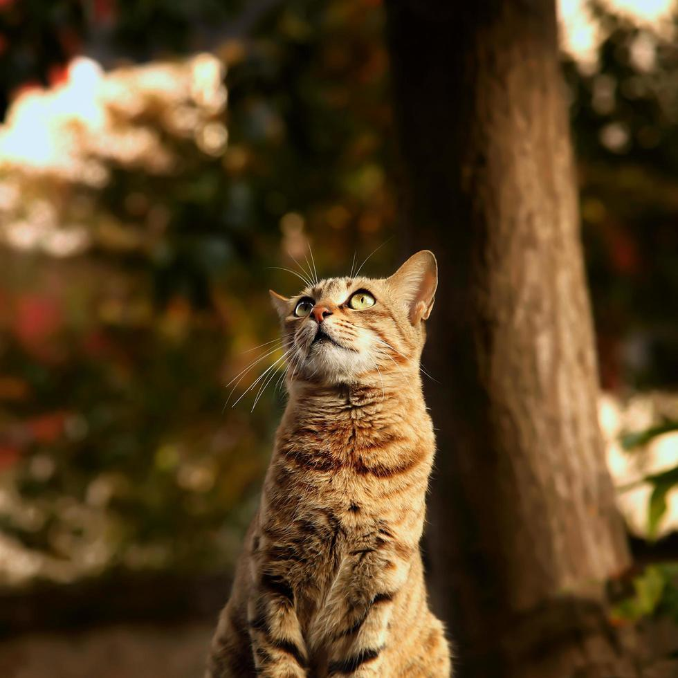 Tabby cat looking up photo