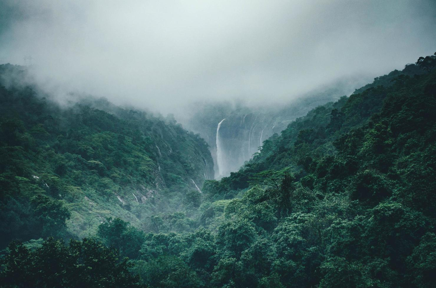 Lush green forest with waterfall  photo