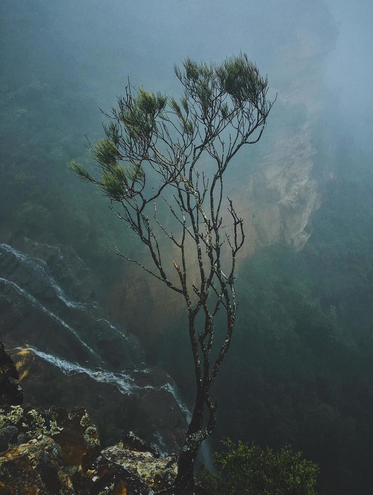 árbol de hojas verdes aislado foto