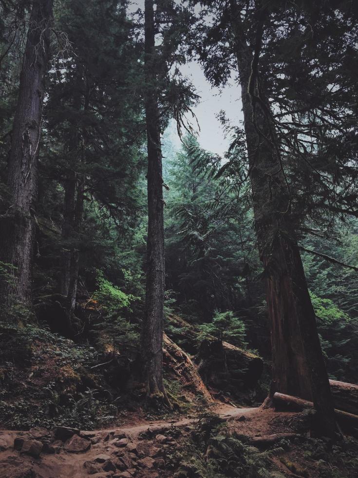 fotografía de maderas foto