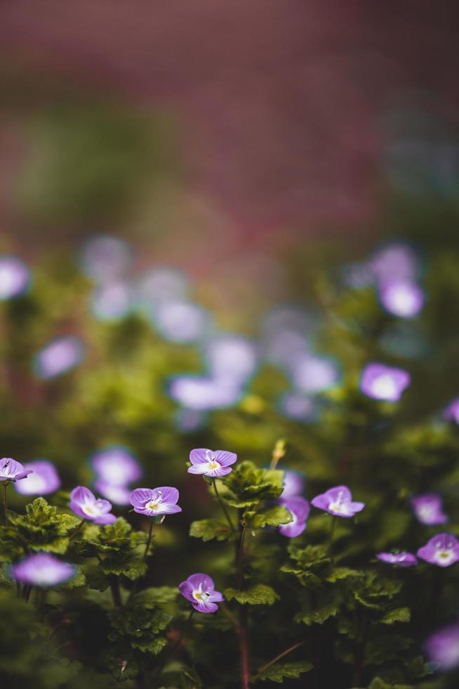 View of purple flowers photo