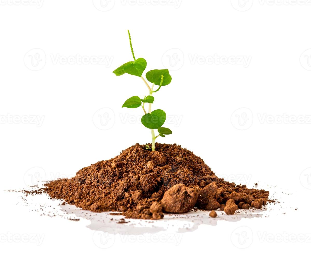 The seedling on white background. photo